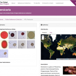 Persicaria in the Global Pollen Project